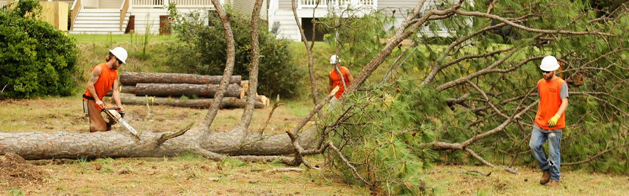 Image result for emergency tree removal service