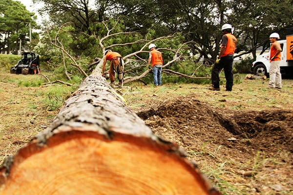Why Sort Of Tree Removal Services Are Available?