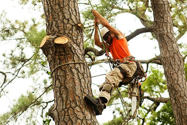 tree trimming chesapeake