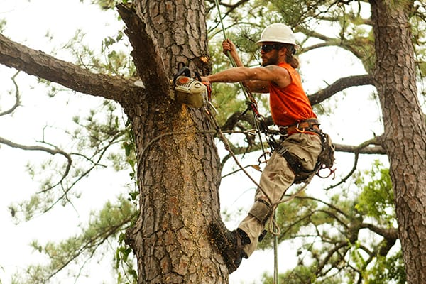 Tarzan Tree Service Trimming and Pruning
