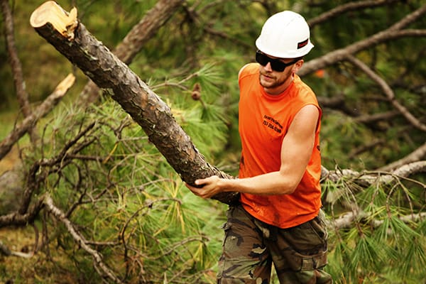 emergency tree service chesapeake