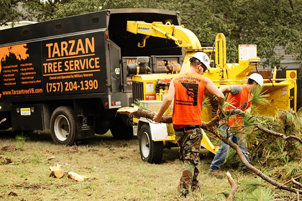 emergency tree service virginia beach