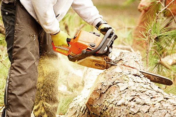 Tarzan Tree Service Emergency Tree Removal Service