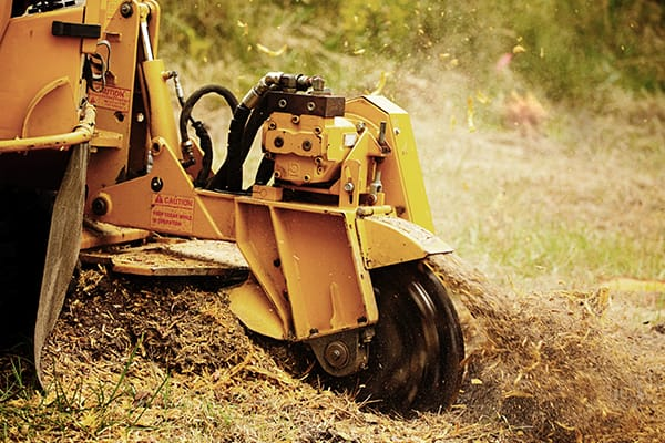 stump grinding norfolk