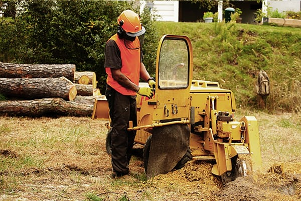 stump removal chesapeake