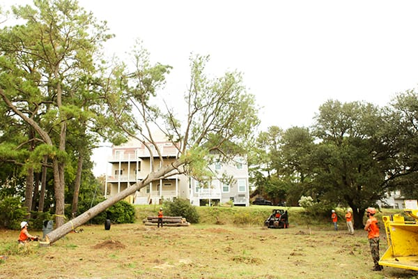 tree removal norfolk