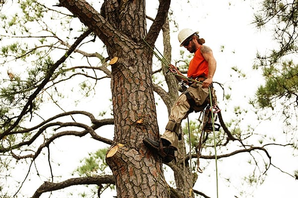 tree pruning norfolk