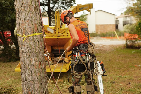 tree trimming companies virginia beach va